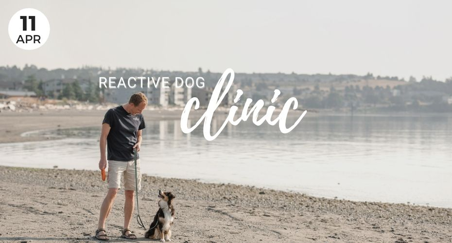 Reactive Dog Clinic, April, Local Events, Dogs, Whidbey Island