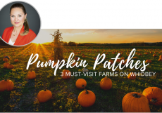 Pumpkin Patches, Whidbey Island, Annie Cash, Where to Buy Pumpkins on Whidbey, Pumpkins